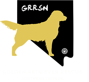 Golden Retriever Rescue Southern Nevada