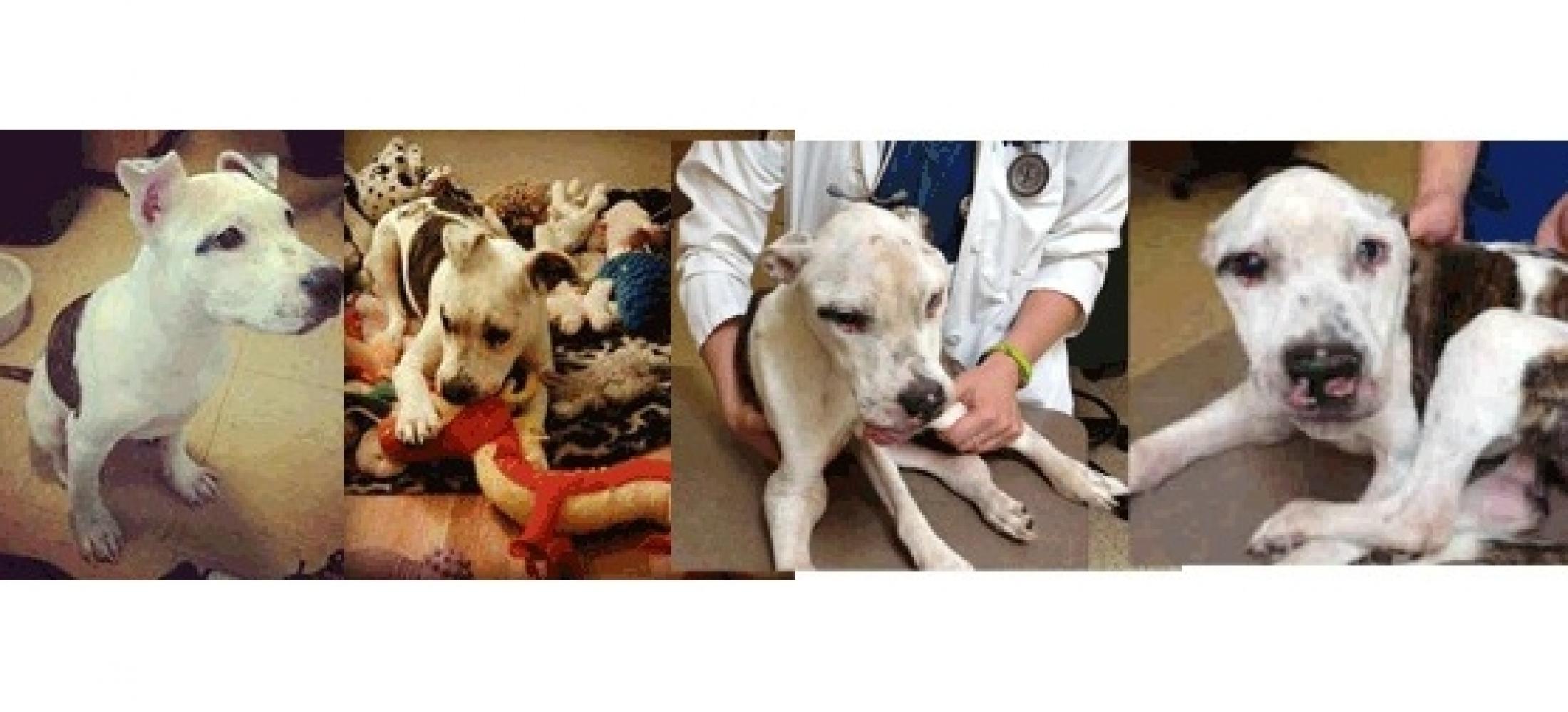 Justice for Puppy Doe - GRRSN